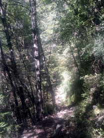 Great trail running through the trees